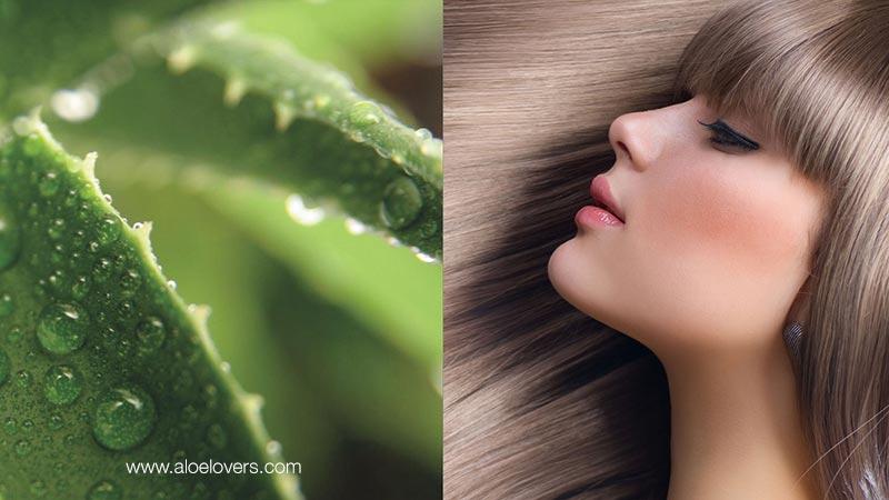 Come utilizzare l'aloe vera sui capelli